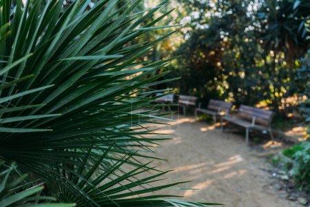 Photo pour Mise au point sélective de palmier vert laisse dans le parc de la ciutadella, Barcelone, Espagne - image libre de droit