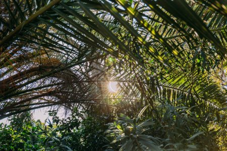 Photo for Close up of green leaves lightened with bright sunlight, barcelona, spain - Royalty Free Image