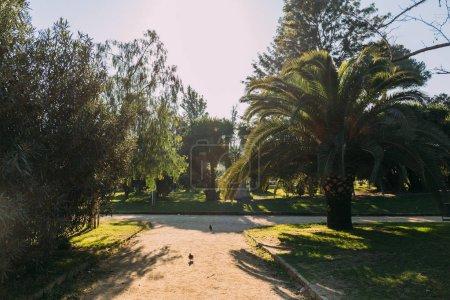 Photo pour Arbres verts et des sentiers de randonnée dans le parc de la ciutadella, Barcelone, Espagne - image libre de droit