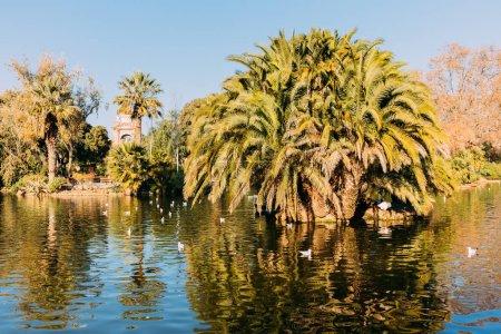 Photo pour Arbres verdoyants et beau lac dans le parc de la ciutadella, Barcelone, Espagne - image libre de droit
