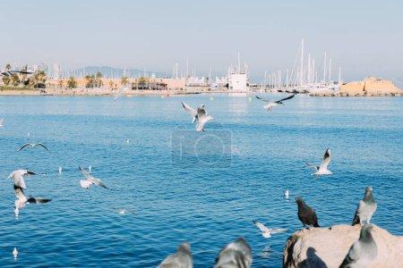 BARCELONA, SPAIN - DECEMBER 28, 2018: pigeons sitting on rocks and seagulls flying over blue sea