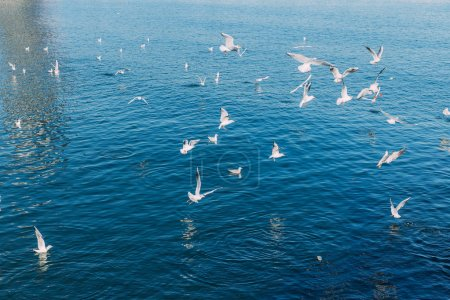 white seagulls flying over tranquil
