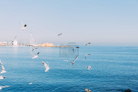 BARCELONA, SPAIN - DECEMBER 28, 2018: scenic view of tranquil blue sea with flying seagulls