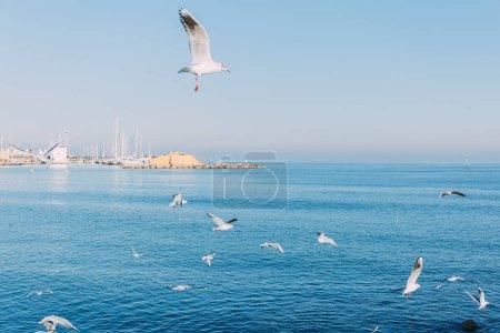 BARCELONA, SPAIN - DECEMBER 28, 2018: white seagulls flying over blue sea