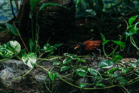 Photo pour Oiseau tropical et plante de liane dans le zoo, Barcelone, espagne - image libre de droit