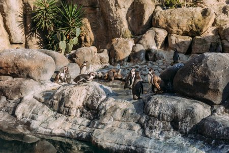 group of pinguins lazing on