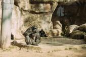 """Постер, картина, фотообои """"шимпанзе, сидя на солнце в зоологическом парке, Барселона, Испания"""""""