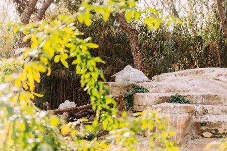 Photo pour Pélican oiseau assis sur des rochers dans le parc zoologique, Barcelone, espagne - image libre de droit