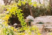 """Постер, картина, фотообои """"Пеликан птица сидит на скалах в зоологическом парке, Барселона, Испания"""""""