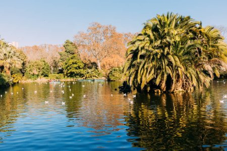 Photo for Scenic view of lake with lush palm trees in parc de la ciutadella, barcelona, spain - Royalty Free Image