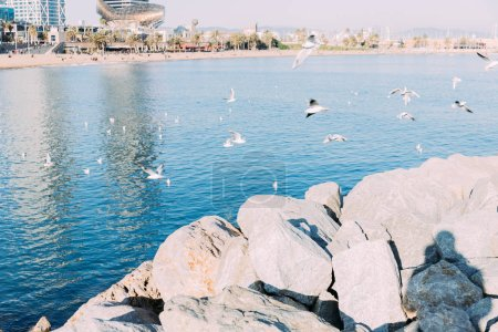 Photo for Coast rocks and calm sea with seagulls flying over water, barcelona, spain - Royalty Free Image
