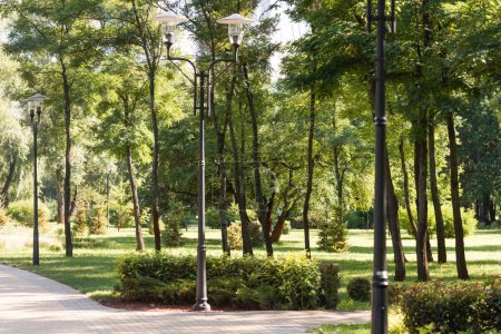 street lights in park with