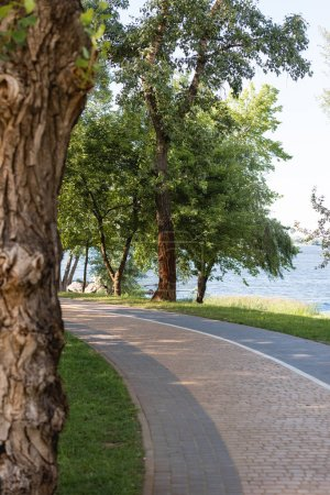 Photo for Selective focus of green leaves on trees near lake in peaceful park - Royalty Free Image