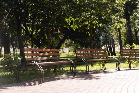 Photo for Sunshine on wooden benches in green peaceful park - Royalty Free Image