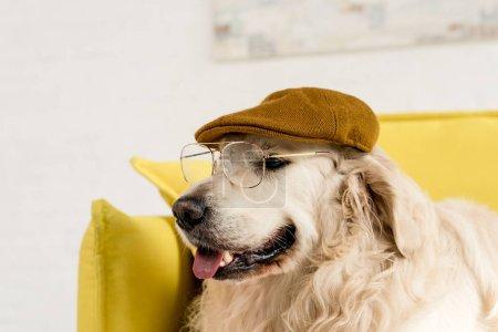 Photo pour Drôle, adorable, mignonne golden retriever en casquette et lunettes - image libre de droit