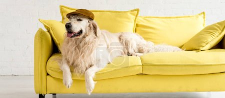 Photo for Panoramic shot of cute golden retriever lying on bright yellow sofa in cap and glasses - Royalty Free Image