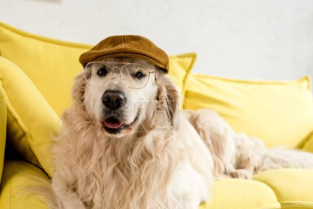 cute golden retriever lying on bright yellow sofa in cap and glasses