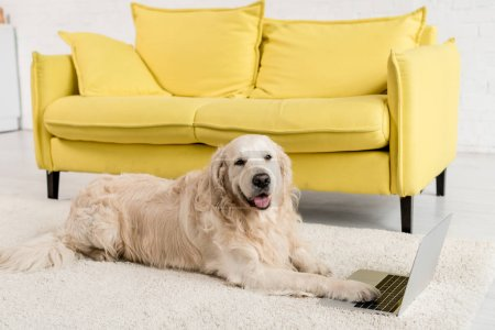 cute golden retriever lying on floor with laptop and looking at camera in apartment