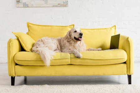 Photo for Cute golden retriever lying on yellow sofa with laptop in apartment - Royalty Free Image