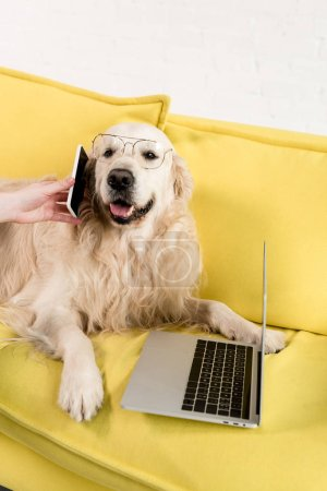 partial view of woman holding smartphone and golden retriever in glasses lying on yellow sofa