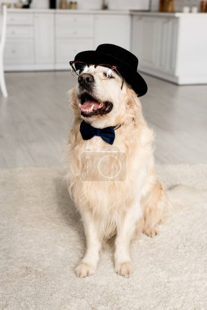 cute golden retriever in hat, bow tie and glasses in apartment