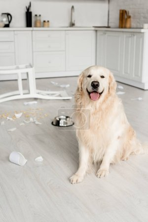 Photo for Cute golden retriever sitting on floor in messy kitchen - Royalty Free Image