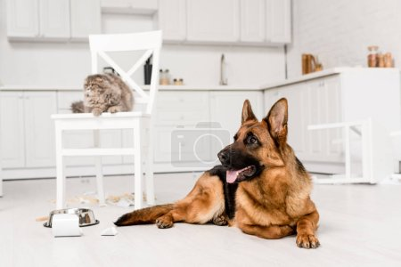 Photo for Selective focus of German Shepherd lying on floor and grey cat lying on chair in messy kitchen - Royalty Free Image
