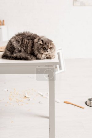 Photo for Grey and cute cat lying on white table in messy kitchen - Royalty Free Image