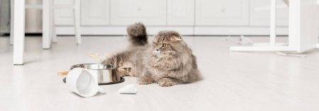 Photo for Panoramic shot of cute and grey cat lying on floor in messy kitchen - Royalty Free Image