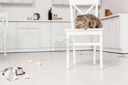 Photo for Cute and grey cat lying on white chair and looking away in messy kitchen - Royalty Free Image