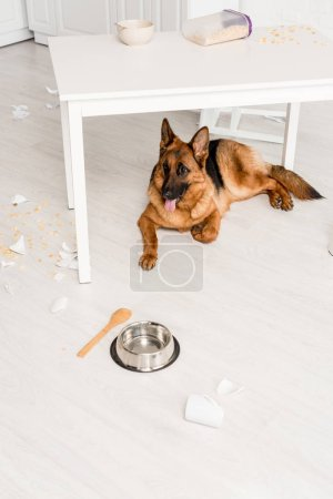 Photo for Cute German Shepherd lying under table on floor and looking away in messy kitchen - Royalty Free Image