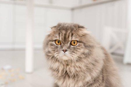 Photo pour Mignon et adorable chat gris en regardant la caméra dans l'appartement - image libre de droit