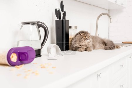 Photo for Selective focus of cute and grey cat lying on white surface in messy kitchen - Royalty Free Image