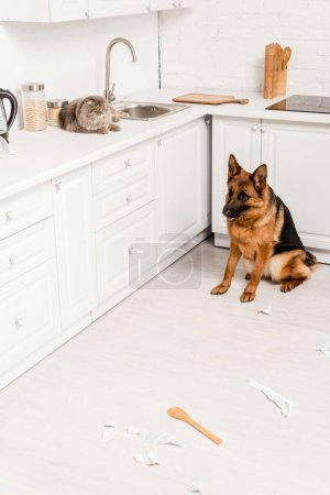 Photo for Cute and grey cat lying on white surface and German Shepherd sitting on floor in messy kitchen - Royalty Free Image