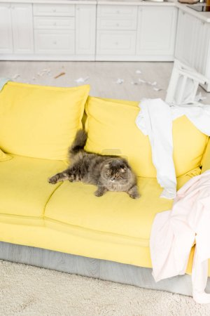 Photo for Cute and grey cat lying on bright yellow sofa in messy apartment - Royalty Free Image