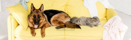 Photo for Panoramic shot of cute and grey cat and dog lying on yellow sofa in messy apartment - Royalty Free Image