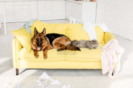 cute and grey cat and dog lying on yellow sofa in messy apartment