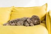 """Постер, картина, фотообои """"Симпатичные и серый кот лежа на яркие желтые диване и глядя в квартире"""""""