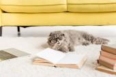 """Постер, картина, фотообои """"Симпатичные серый кот в очках, лежа на полу с ноутбуком и книги"""""""
