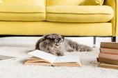 """Постер, картина, фотообои """"Симпатичные серый кот в очках, лежа на полу с книгами в квартире"""""""