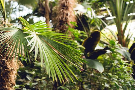 Foto de Selective focus of green palm leaves in orangery - Imagen libre de derechos