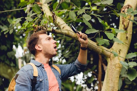 Photo for Shocked traveler with backpack examining tree with magnifier in tropical forest - Royalty Free Image