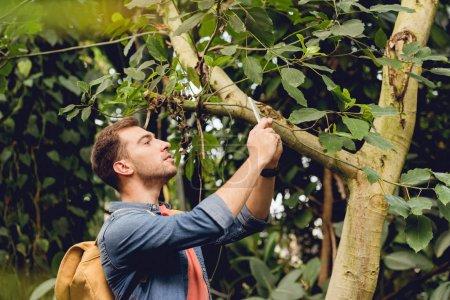 Foto de Traveler with backpack taking photo of tree on smartphone in tropical forest - Imagen libre de derechos