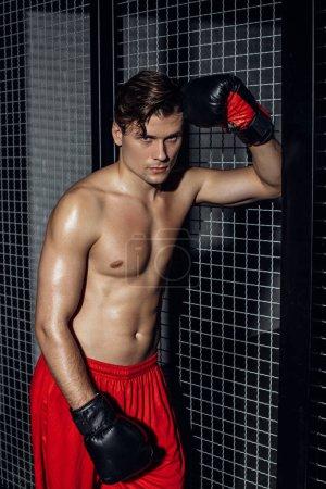 Photo pour Boxeur musculaire beau dans des gants de boxe restant près de filet de fil et regardant l'appareil-photo - image libre de droit