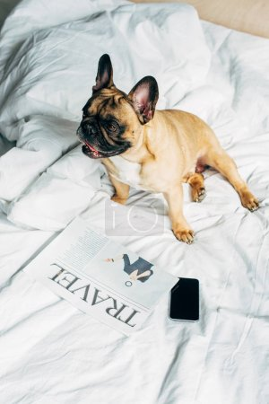Photo for Overhead view of purebred french bulldog lying near smartphone with blank screen and travel newspaper on white bedding at home - Royalty Free Image