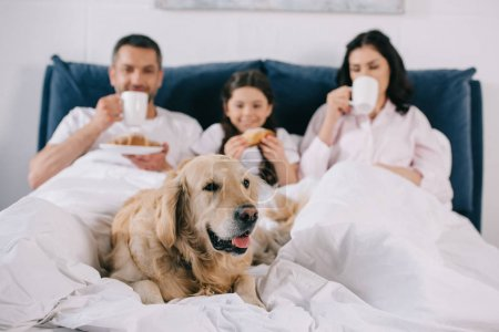 Photo for Selective focus of golden retriever lying on bed near parents with cups and kid - Royalty Free Image