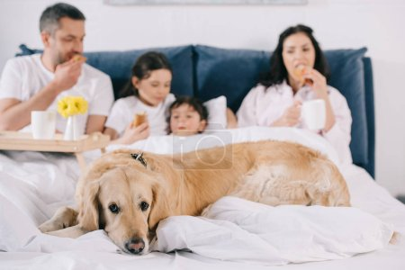 Photo for Selective focus of golden retriever near family eating breakfast in bed - Royalty Free Image