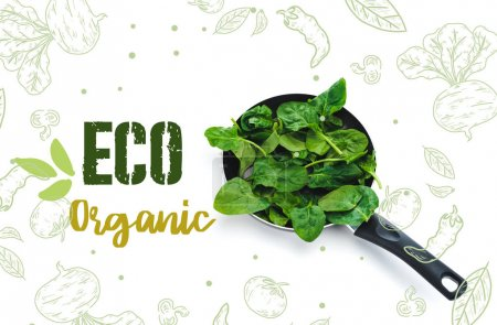 Photo for Green fresh spinach leaves in frying pan on white background with eco organic lettering - Royalty Free Image