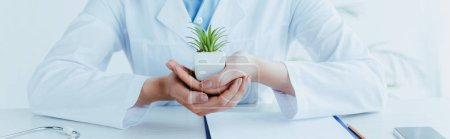 Photo for Panoramic shot of doctor sitting at workplace and holding green potted plant - Royalty Free Image