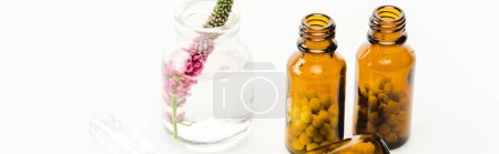 panoramic shot of veronica flower in glass bottle near pills isolated on white